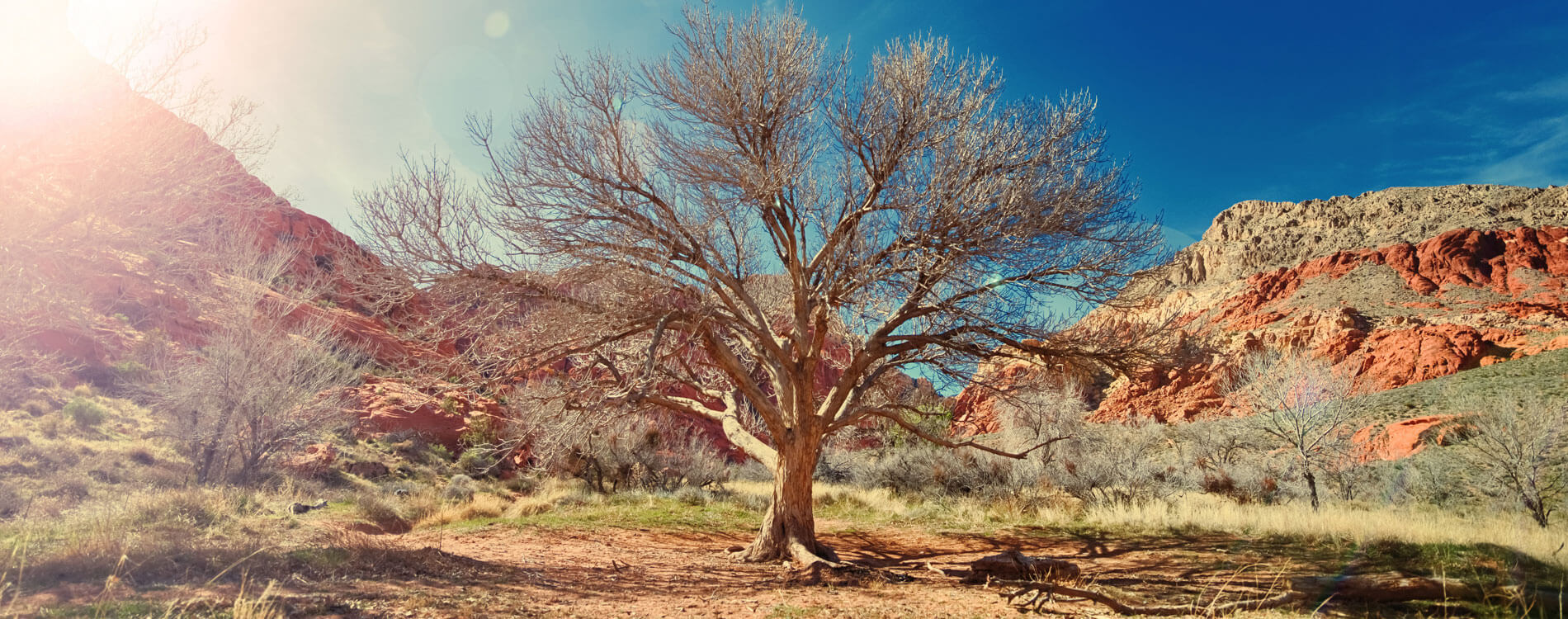Tree in dry desert